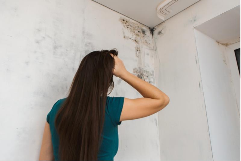漆喰壁をカビさせない!4大好物と3大原因を知って予防&対策を